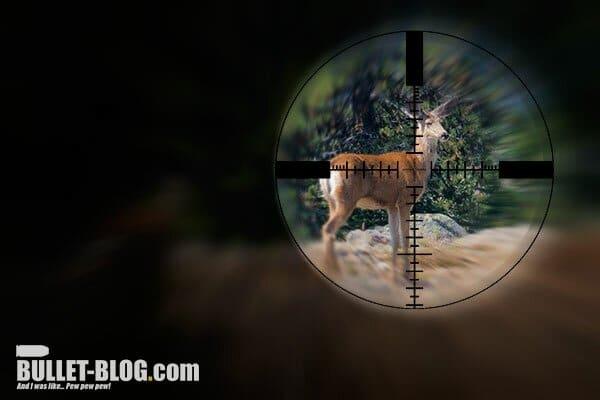Where Are All The Deer? Deer Hunting Season in SW Washington